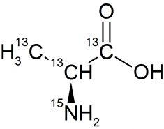 CCN55P1