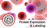 Labeled Protein Expression